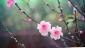 Аватар пользователя Sakura