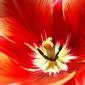 Аватар пользователя camellia
